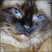 Портрет кота :: Дмитрий Конев