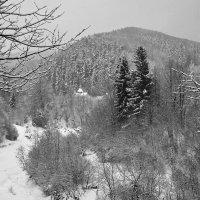 Карпатская зима :: Андрий Майковский
