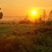 Сонное солнце... :: Roman Lunin