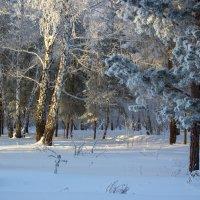 Поет зима - аукает. :: Kassen Kussulbaev