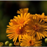 Декабрьские цветы :: Leonid Korenfeld