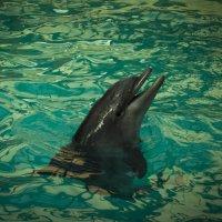 дельфин :: Юлия Белакова
