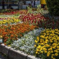 Цветочная клумба :: Константин Фролов