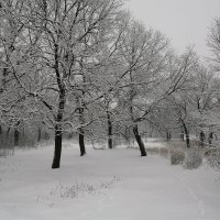 В  лесу :: Николай Алехин
