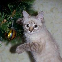 мой кот :: Анастасия Валерьева