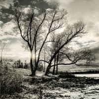 голые деревья) :: Николай