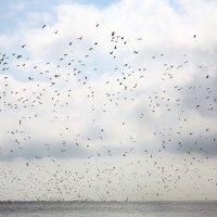 Балтийское море :: Алексей Оводов