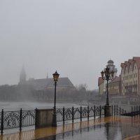 Дождливый Калининград :: Наталья Левина
