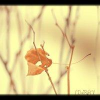 Последний листок осени :: DaRiA V