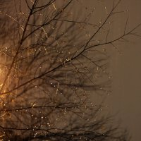 дождик :: Регина Богомолова