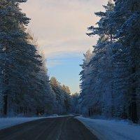 Синий лес :: Михаил Лобов (drakonmick)