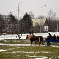 Как по деревне :: Владимир Болдырев