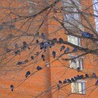 Голубиные посиделки . :: Мила Бовкун