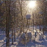 12.День зимнего солнцестояния---04 :: Владимир Холодный
