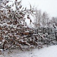 Снег, словно память былого... :: Лесо-Вед (Баранов)