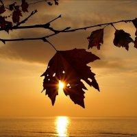 Луч солнца золотого :: Swetlana V