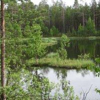 То ли болото,то ли озеро... :: Галина Полина