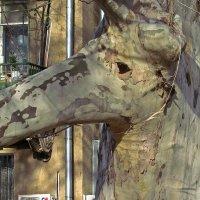 то ли слоник, толь жираф, толь тапир... :: Александр Корчемный