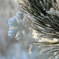 Про снежинку. :: nadyasilyuk Вознюк