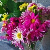 Хризантемы,мои хризантемы :: Наталья Джикидзе (Берёзина)