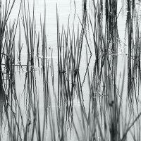 На  том  пруду... :: Валерия  Полещикова