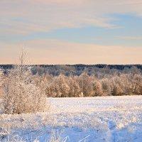 Белое поле :: Михаил Лобов (drakonmick)
