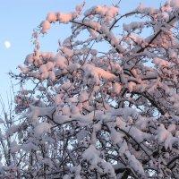 Луна и солнце :: Самохвалова Зинаида
