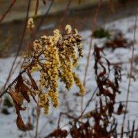 """...Кабы на цветы да не морозы..."" :: Юрий"