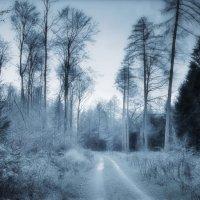 в синем-синем лесу... :: Лара Leila