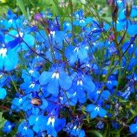 Цветы лета ))) :: оксана