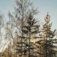 Мороз и солнце :: Алексей Масалов