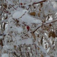 Забытая ягода шиповника :: Шухрат Батталов