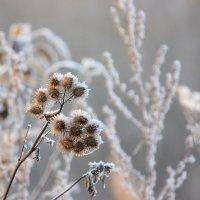 Просто наступила зима... :: Ната Волга