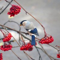 Снегурка :: Ната Волга