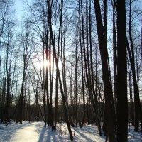 То, что ждешь каждую зиму - первые тени :: Андрей Лукьянов