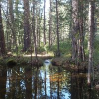 322. Ручей в лесу :: Александр