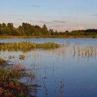 Закат над лесным озерком :: Михаил Михальчук