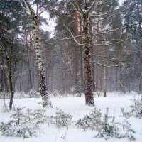 снег метёт... :: Галина Филоросс