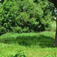 Коза на зелёной травке.. :: zoja