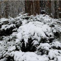 Мороз снежком укутывал... :: Тамара (st.tamara)