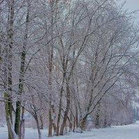 Графика зимы.. 2 :: марк