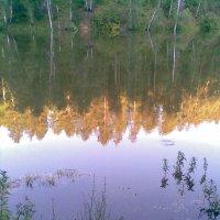 И снова красота пруда :: Владимир Ростовский