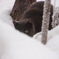 Бонифаций на охоте :: Елена Белоус