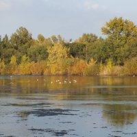 328. Осень в парке :: Александр