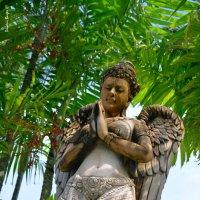 Тропический ангел :: Дмитрий Боргер