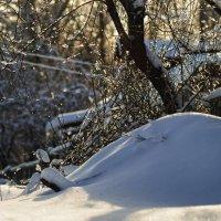 Морозное утро :: sorovey Sol