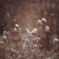 снег :: Алексей Салло