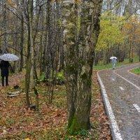 Зонтики :: Михаил Михальчук