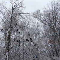 Голуби в зимнем парке... :: Тамара (st.tamara)