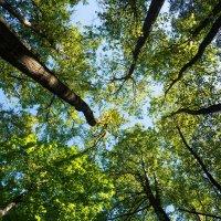 Когда деревья были большими! :: Alex Bush